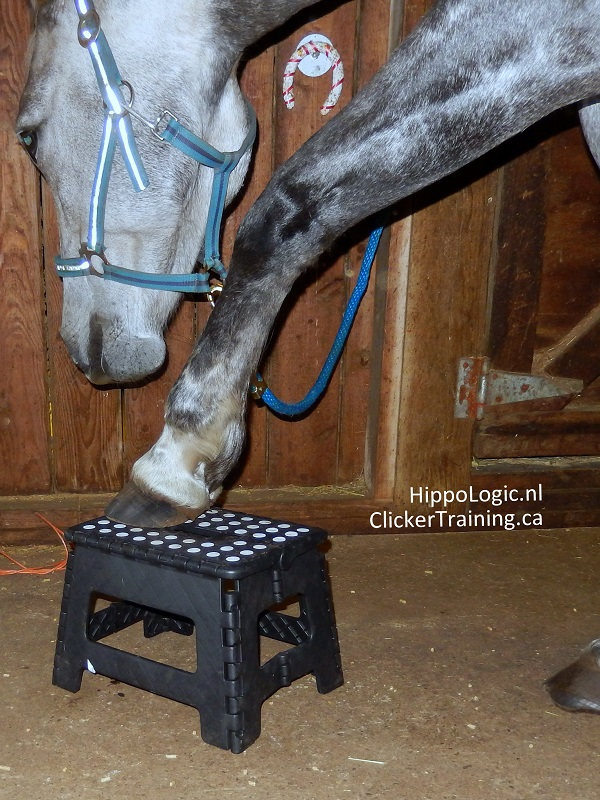 Preparing for a hoof stand by HippoLogic