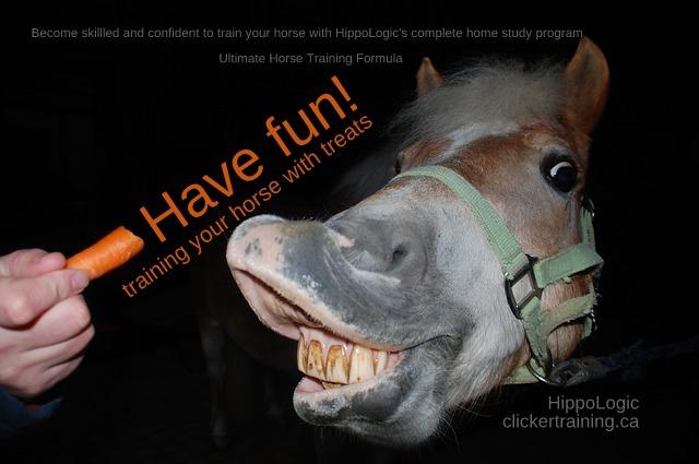 ultimate horse training formula_hippologic clickertraining