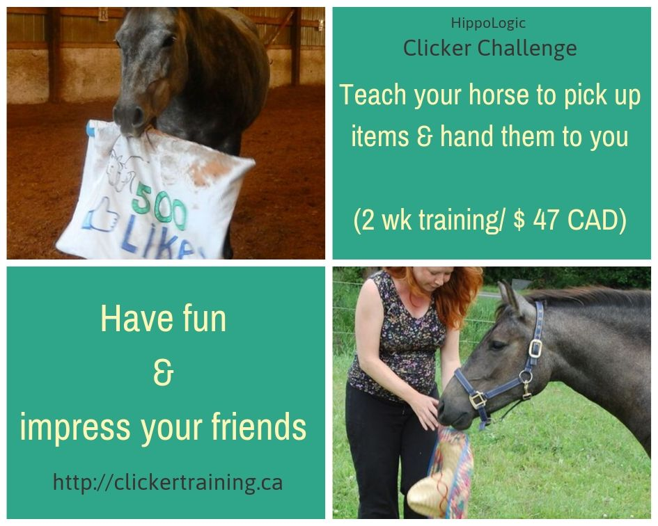 Impress your friends with your smart horse