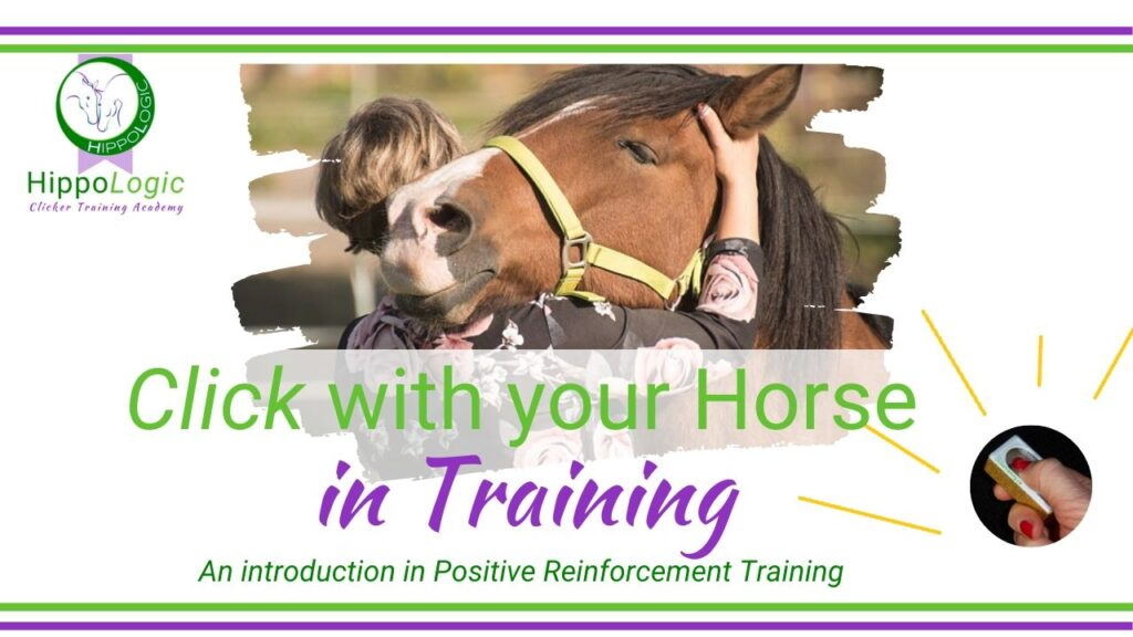 Click With Your Horse in training