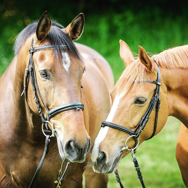 Most horses don't value verbal praise and therefor it doesn't work in training