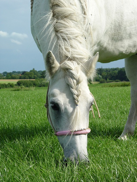 Pony's are easy keepers and always interested in food