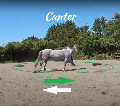 Teach your horse to canter around a reverse round pen