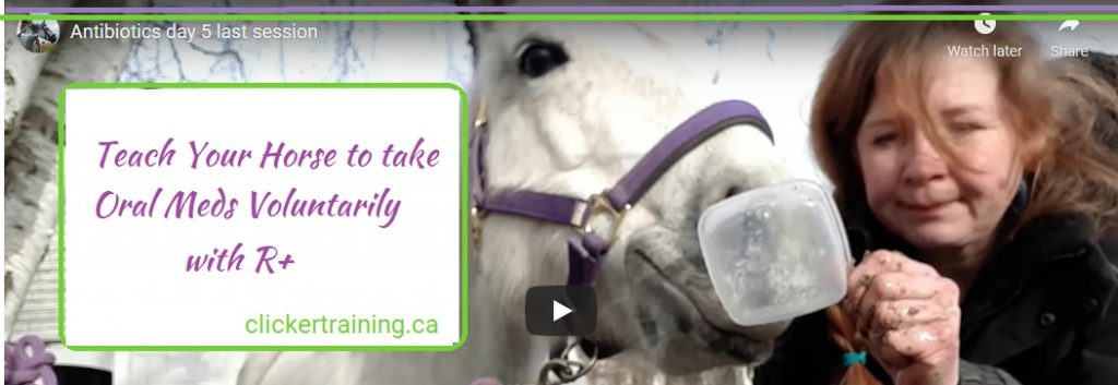 Train your horse to take oral medication with R+