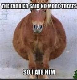 No more treats