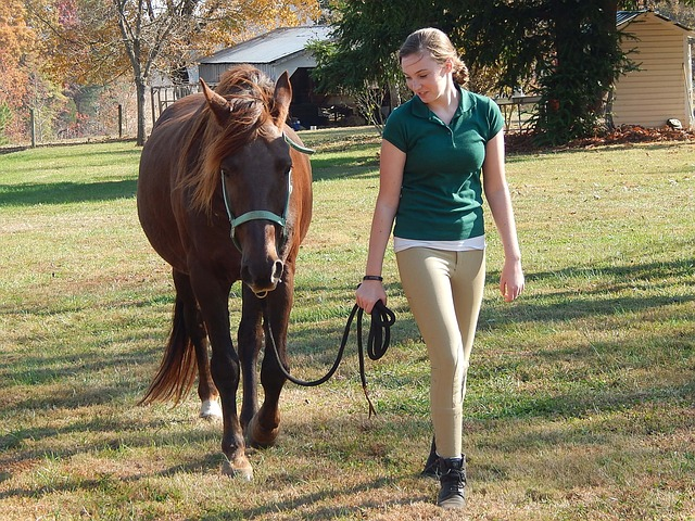 Hand walking can be an excellent start to get your horse fit