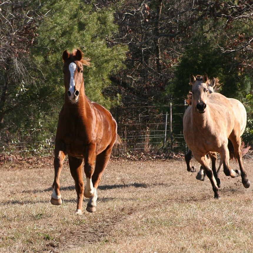Horses love to move!